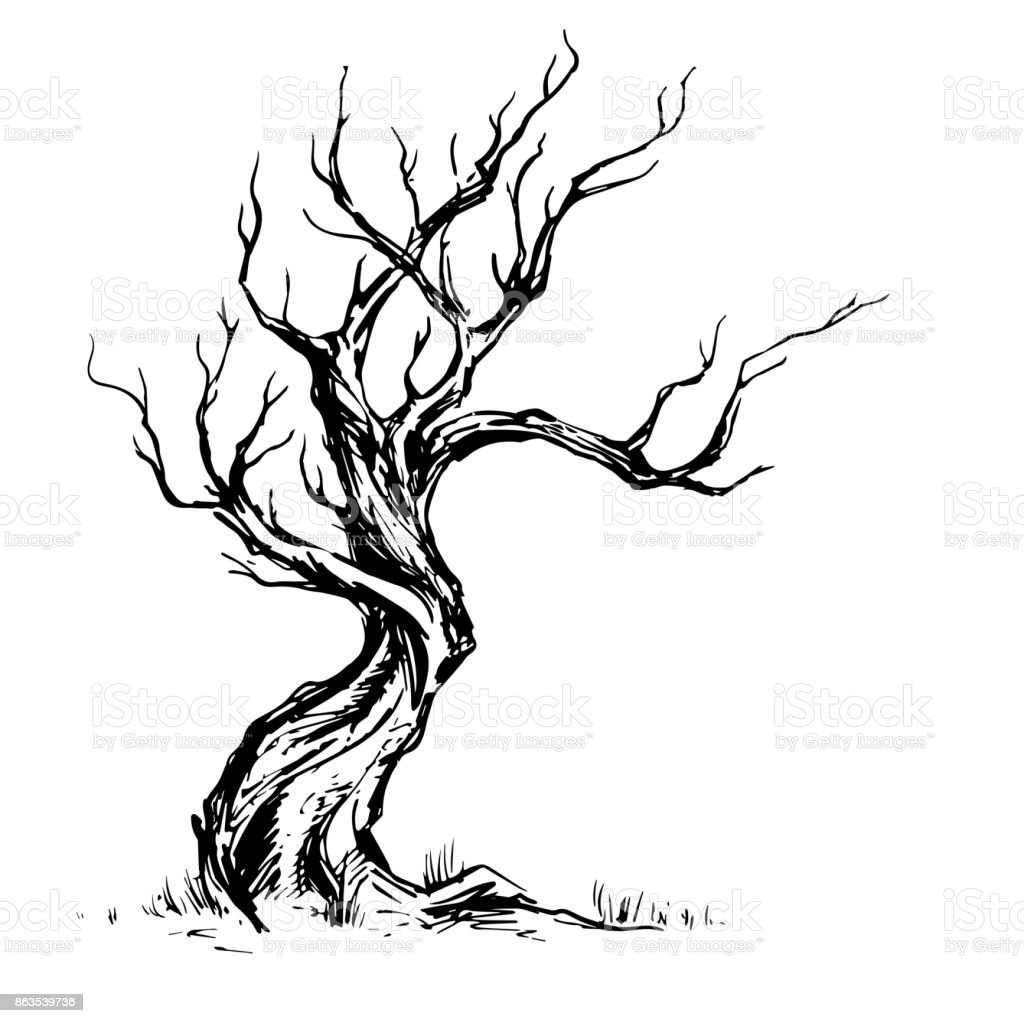 Handsketched illustration of old crooked tree. vector art illustration