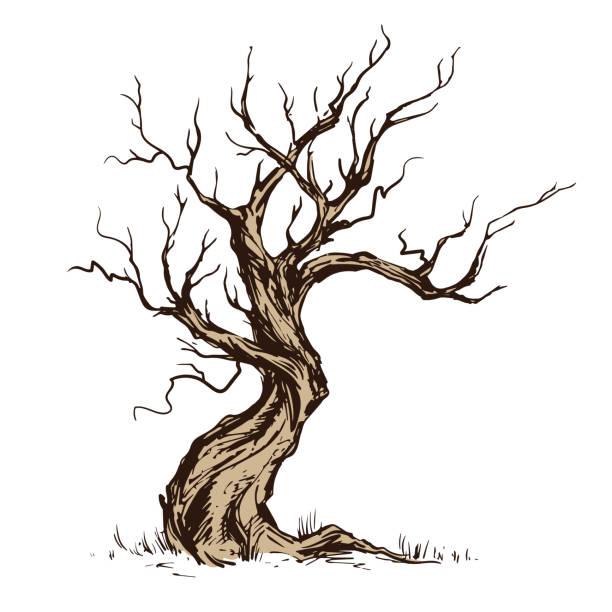 handsketched abbildung von alten krummen baum. - winterruhe stock-grafiken, -clipart, -cartoons und -symbole