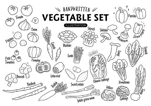 Handwritten rough vegetable illustration