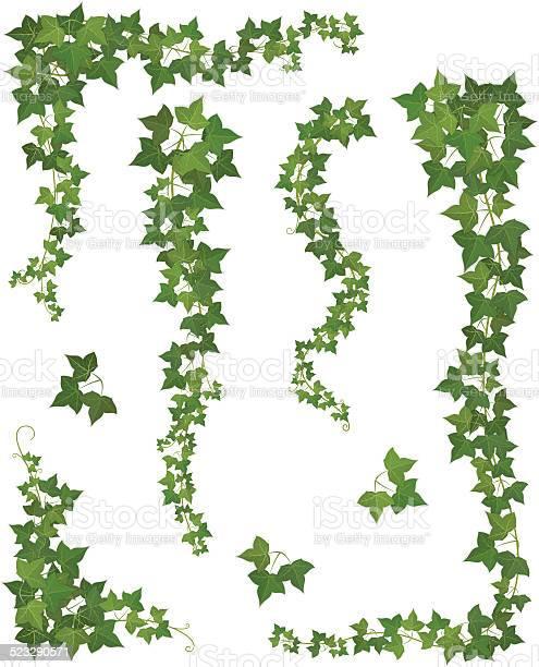 Hanging Branches Of Ivy Set Stockvectorkunst en meer beelden van Achtergrond - Thema