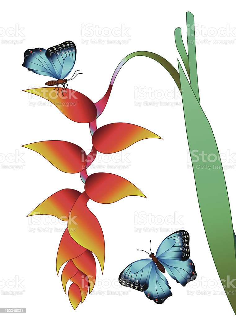 hanging heliconia and morpho butterfly royalty-free hanging heliconia and morpho butterfly stock vector art & more images of amazon rainforest