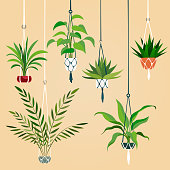 Hanging house plant. Indoor plants with macrame hanger. Scandinavian interior planting vector set