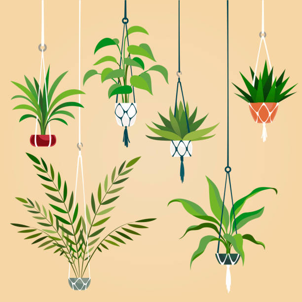 Potted Plants PNG Images, Free Transparent Potted Plants Download - KindPNG