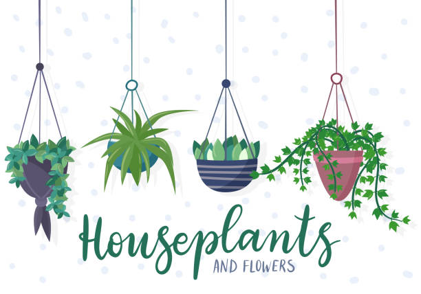 Top 60 Potted Plant Clip Art, Vector Graphics and ...