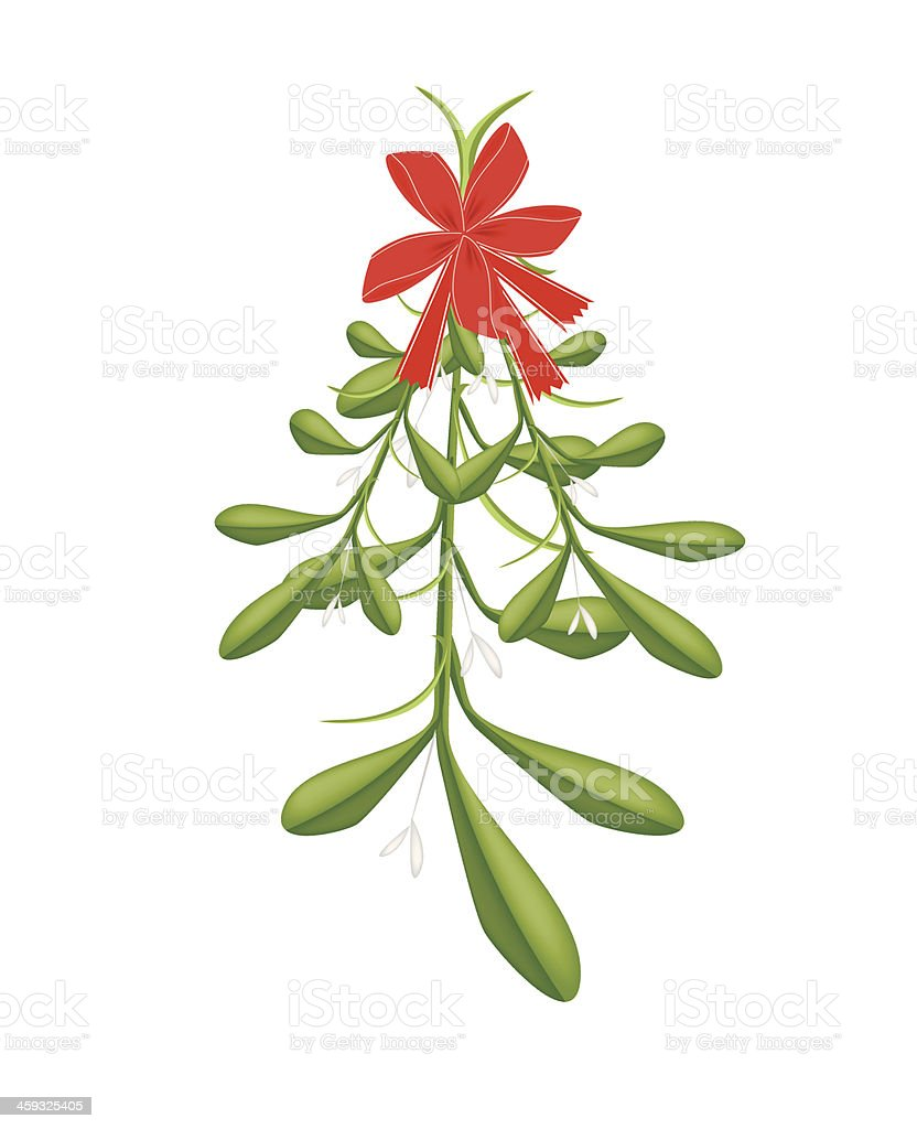 Hanging Lovely Green Mistletoe with A Red Bow vector art illustration