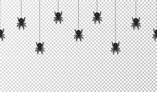 Hanging spiders for Halloween decoration, seamless pattern. Scary spiders hanging on cobweb, transparent background