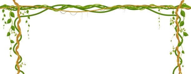 bildbanksillustrationer, clip art samt tecknat material och ikoner med hängande vinstockar grenar. tropisk djungel och växter på vit bakgrund. - klätterväxt