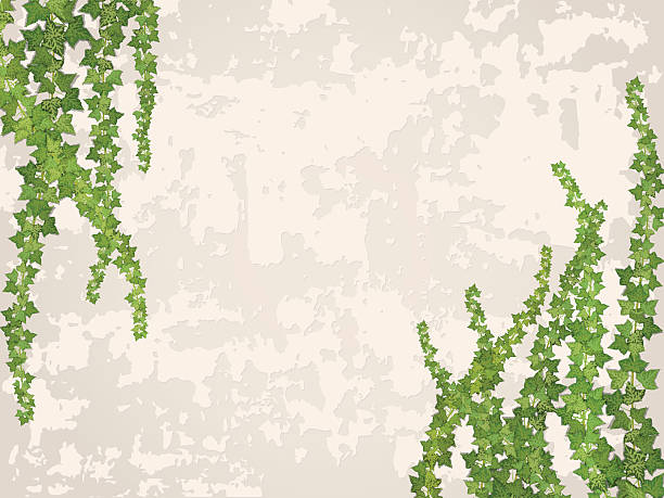 ilustrações de stock, clip art, desenhos animados e ícones de pendurar vines sobre o fundo de parede de estuque - ivy building