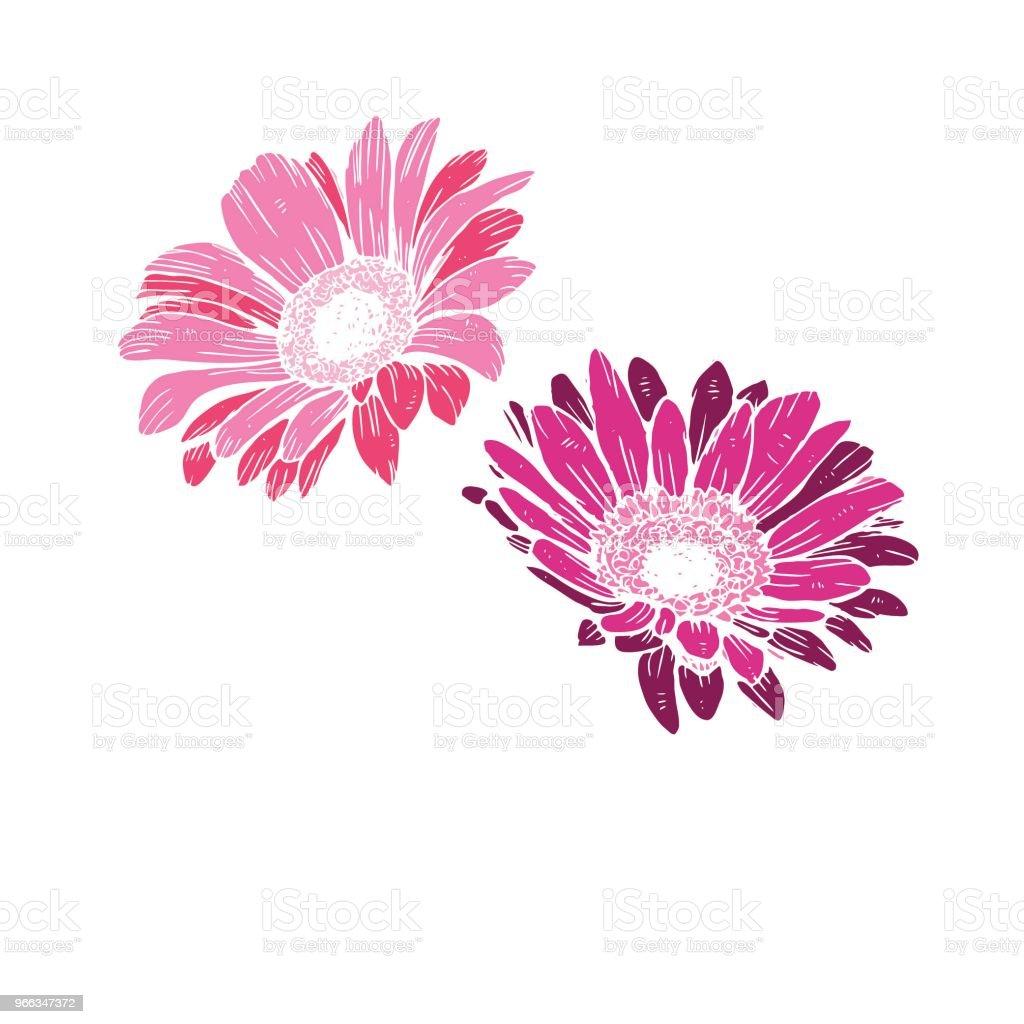 Happy Birthday Rosa Text Isoliert Auf Weissem Hintergrund Festliche Typografie Vektor Designs Fur Grusskarten