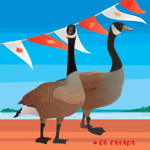 Happy Canada Day! Happy Canada Day! Canada Goose. Vector illustration. canada goose stock illustrations