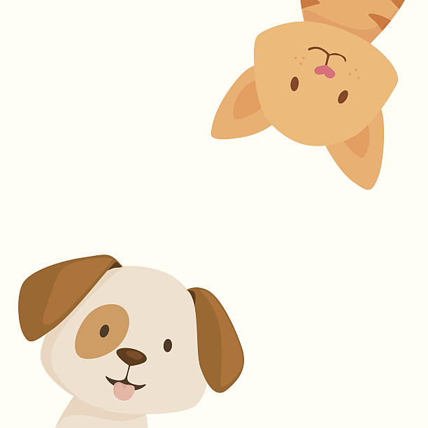 stockillustraties, clipart, cartoons en iconen met happy cat and dog - dierenziekenhuis