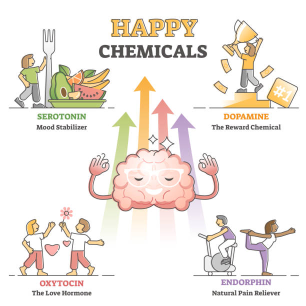 Happy chemicals as good and positive mood hormonal causes outline diagram vector art illustration