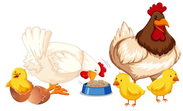 2,328 Baby Chicks Clipart Illustrations & Clip Art - iStock
