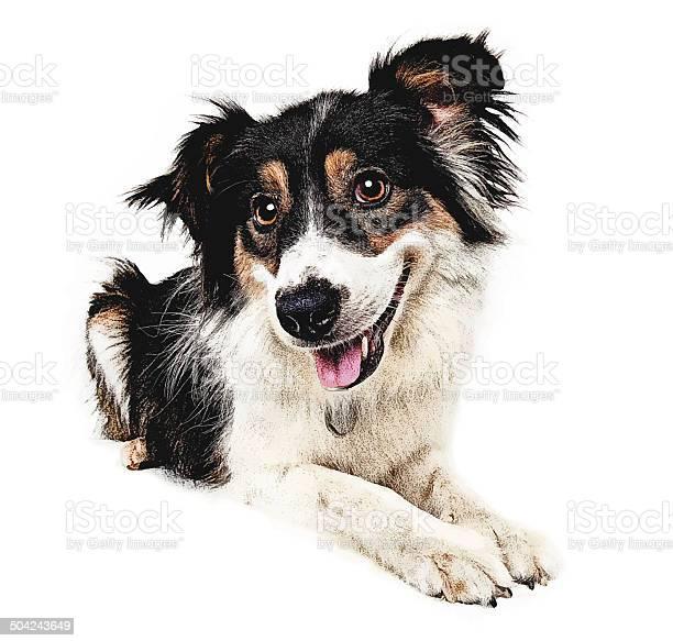 Happy dog cutout vector id504243649?b=1&k=6&m=504243649&s=612x612&h=6t6xecs ibrptur9hxvxb5goell3d3gez8i0m bavgq=