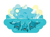 Happy dolphins swim and jump