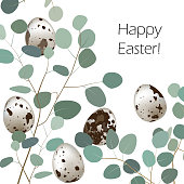 Happy Easter or spring greeting card. Quail eggs and leaf sprigs of eucalyptus background. Vector
