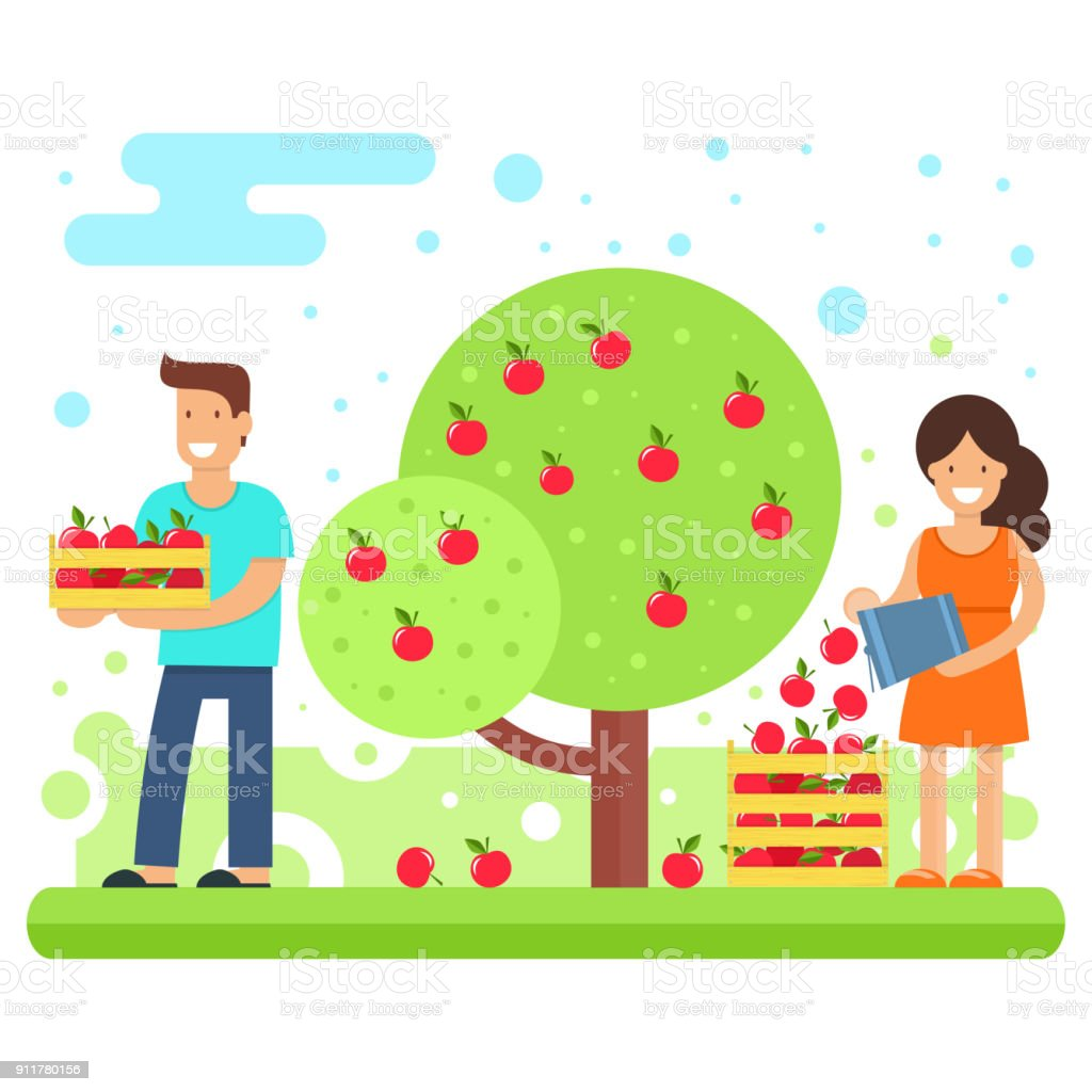 royalty free apple orchard clip art vector images illustrations rh istockphoto com