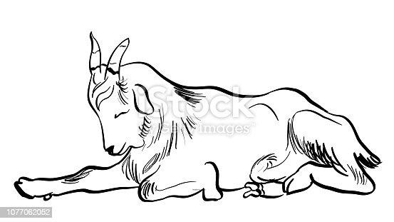 Cute little goat having a daytime nap