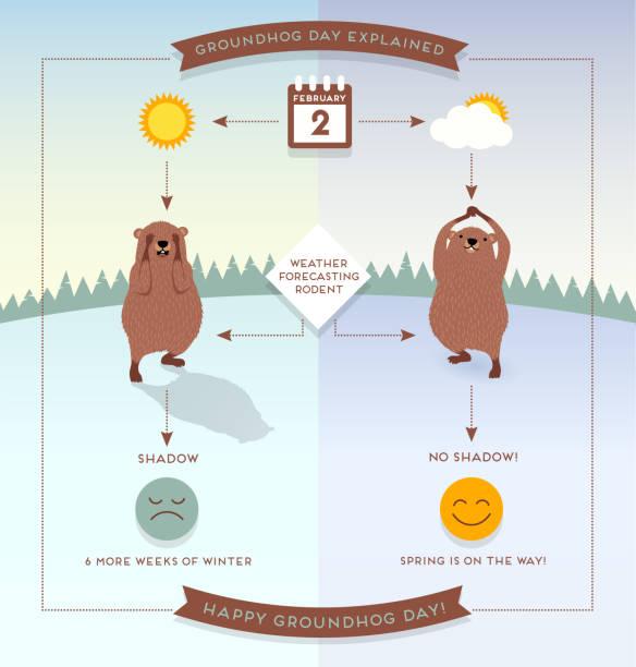 ilustraciones, imágenes clip art, dibujos animados e iconos de stock de feliz día de la marmota infografía organigrama estilo ilustración con marmotas lindos. - groundhog day