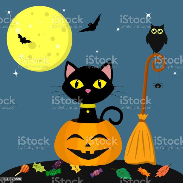 Happy halloween a black cat is sitting in a pumpkin near the broom vector id1041173536?b=1&k=6&m=1041173536&s=612x612&h=gjqtfsf9k5ga6rw0igwaj0hve2vixh h5meffudfh84=