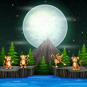 Happy monkeys in night landscape