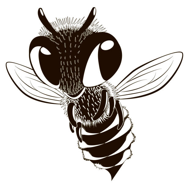 Black And White Bumble Bee Illustrations, Royalty-Free ...