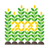 Happy New Year greeting card with corn crop and 2020 lettering. Elegant flat style vector illustration for agricultural brochure cover or farming calendar