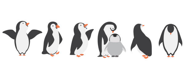 Happy penguin characters in different poses set Happy penguin characters in different poses set penguin stock illustrations