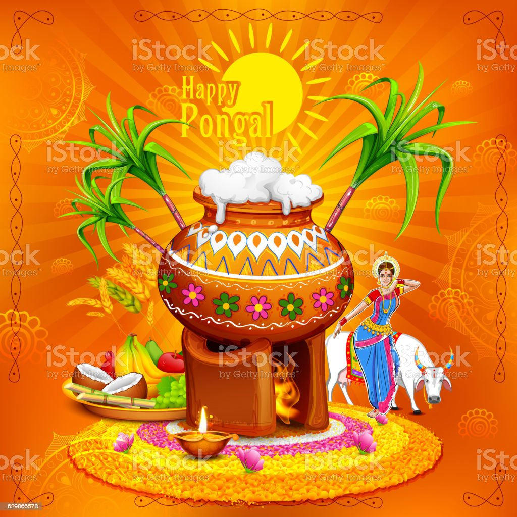 Happy Pongal Greeting Background Stock Vector Art More Images Of