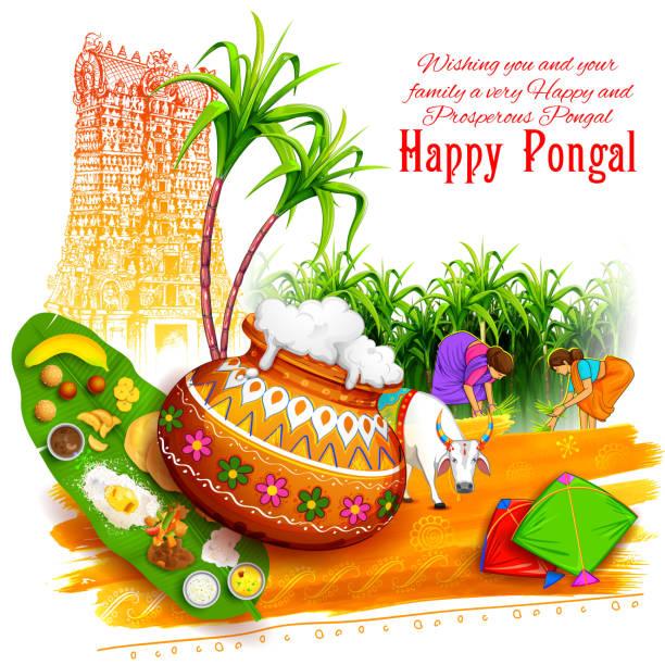 illustrazioni stock, clip art, cartoni animati e icone di tendenza di felice sfondo cartolina pongal - illustrazioni di canna da zucchero