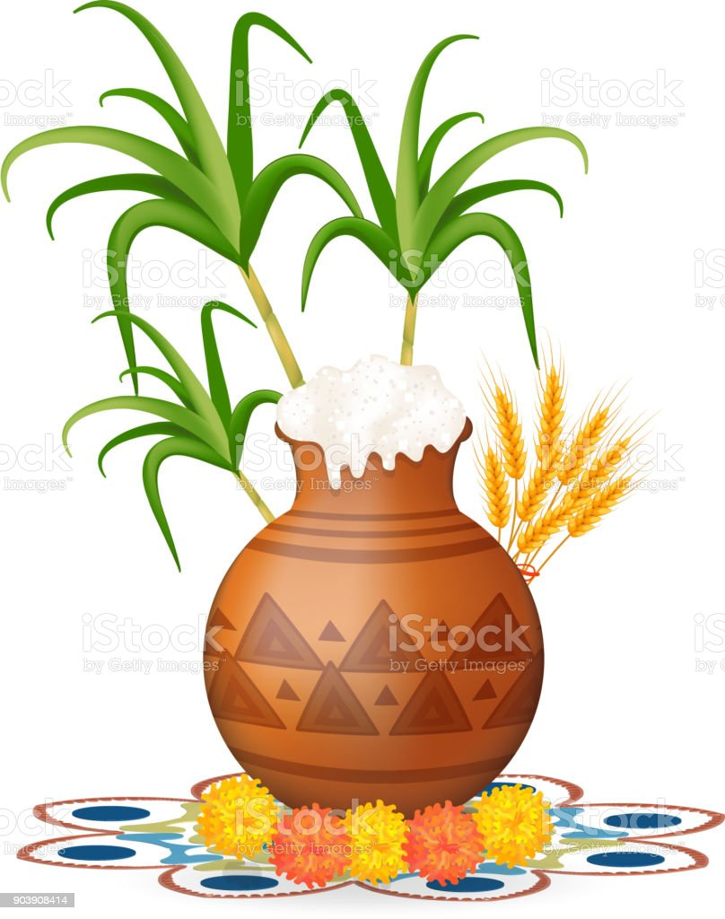 Happy pongal greeting card. Holiday India. Festival of harvesting celebrations with rice in traditional mud pot, sugarcane, marigold or genda or zendu flower on colorful rangoli. Vector illustration.