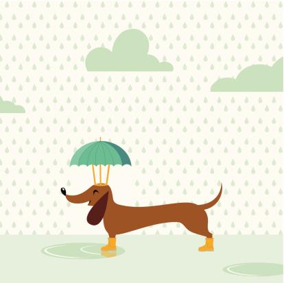 Happy rainy dog