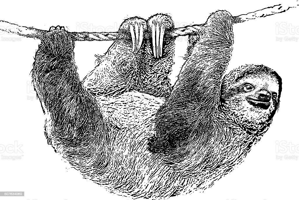Happy Sloth Climbing On A Rope vector art illustration