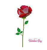Happy Valentines Day greeting card with pink and red roses, Valentine rose concept design.
