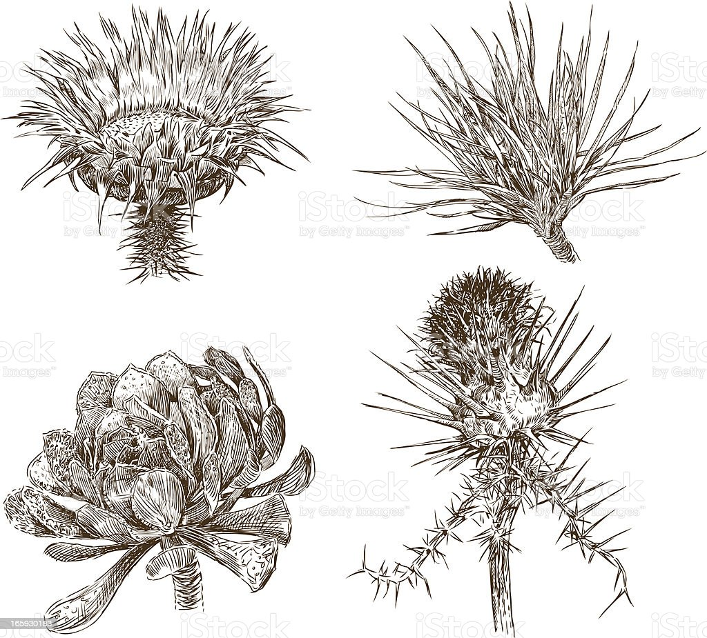 hardy plants royalty-free stock vector art