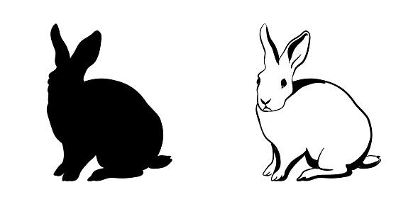 Hare Posing Silhouette