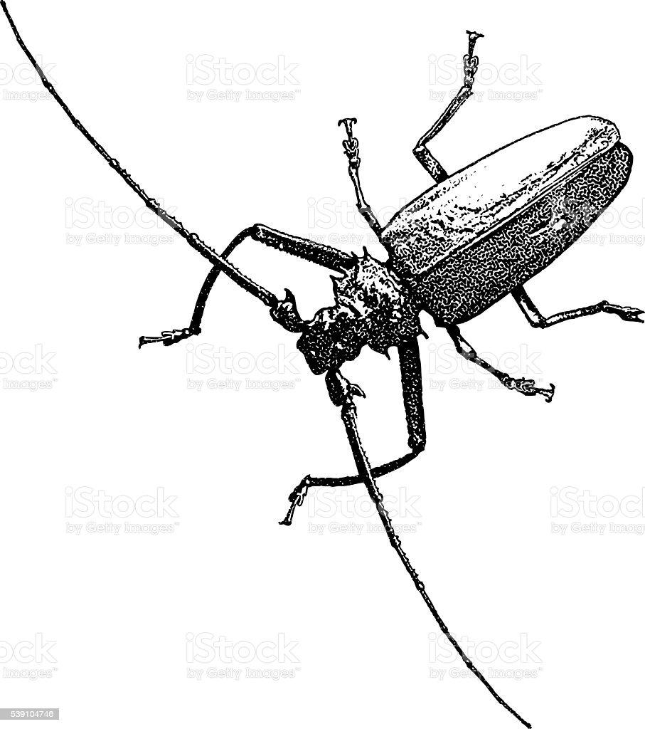 Ilustración de Escarabajo Arlequín y más banco de imágenes de Blanco ...