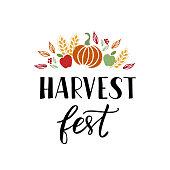 Harvest fest - hand drawn lettering phrase with autumn harvest symbols. Harvest fest poster design. Vector illustration. Isolated on white background.