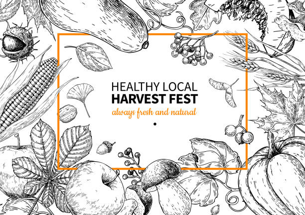 Harvest festival. Hand drawn vintage vector frame illustration with vegetables, fruits, leaves. Harvest festival. Hand drawn vintage vector frame illustration with vegetables, fruits, leaves. Farm Market poster. Vegetarian set of organic products. Detailed food drawing. Great for menu, banner, label, logo, flyer, poster. harvesting stock illustrations