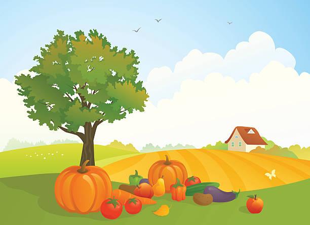 harvest landschaft - herbstgemüseanbau stock-grafiken, -clipart, -cartoons und -symbole