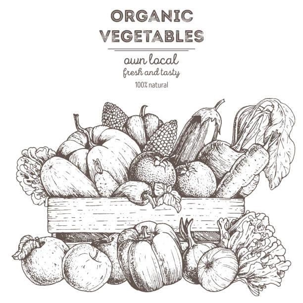 Harvest of vegetables in the basket. Hand drawn vector illustration. Engraved style. vector art illustration