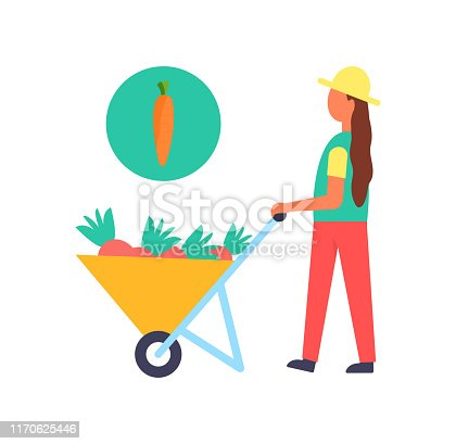 Harvest person with cart full of ripe carrots. Female farmer harvester pulling trolley transporting harvesting products to farm. Agriculture vector poster