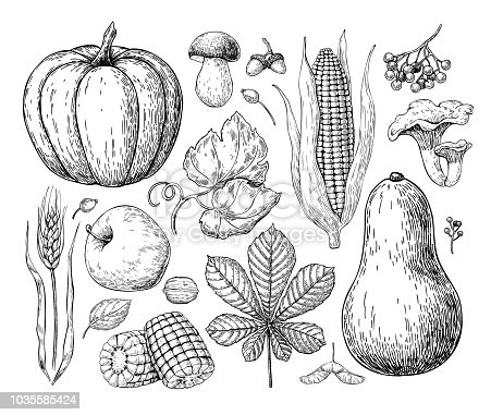 Harvest products. Hand drawn vintage vector illustration with pumpkin, apple, corn, wheat, muchroom. Farm Market poster. Organic Vegetarian set.  Detailed food drawing. Great for menu, banner, label, logo, flyer, poster.