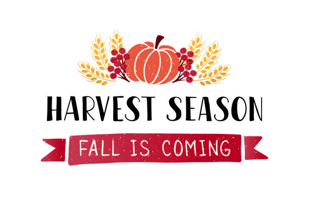 Harvest Season lettering Harvest Season- hand drawn lettering phrase with harvest symbols. Harvest fest poster design. Autumn festival invitation. Fall party template. For postcard or invitation card, banner. Vector illustration. harvesting stock illustrations