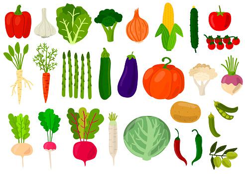 Harvest. Set of fresh vegetables. Cabbage, peppers, tomatoes, broccoli, lettuce,  olive, beat, potato, asparagus, pumpkin, garlic, peas, onion, corn, carrot, radish, cauliflower. Vector illustration.