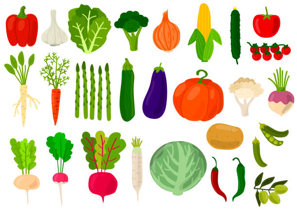 Harvest. Set of fresh vegetables. Cabbage, peppers, tomatoes, broccoli, lettuce,  olive, beat, potato, asparagus, pumpkin, garlic, peas, onion, corn, carrot, radish, cauliflower. Vector illustration. Harvest. Set of fresh vegetables. Cabbage, peppers, tomatoes, broccoli, lettuce,  olive, beat, potato, asparagus, pumpkin, garlic, peas, onion, corn, carrot, radish, cauliflower. Vector illustration. horseradish stock illustrations