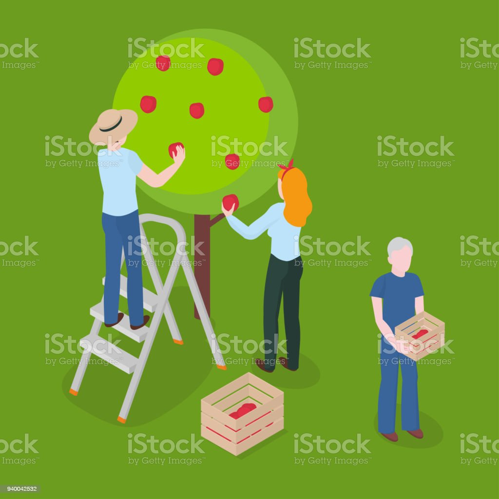 Harvesting apples. Farming, gardening and agriculture vector art illustration
