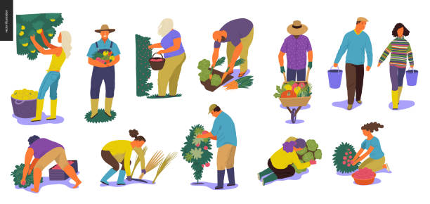 Harvesting people set Harvesting people - set of vector flat hand drawn illustrations of people doing farming job - watering, gathering, planting, growing and transplant sprouts, self-sufficiency and harvesting concept harvesting stock illustrations