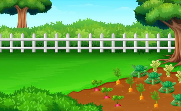 ilustrações, clipart, desenhos animados e ícones de colheita de plantações em campos - horta