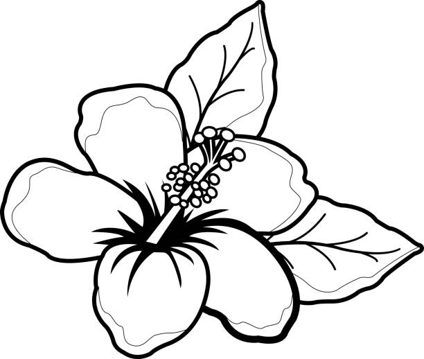 Hawaiian Hibiscus Flower Black And White Coloring Book Page Vector Art Illustration